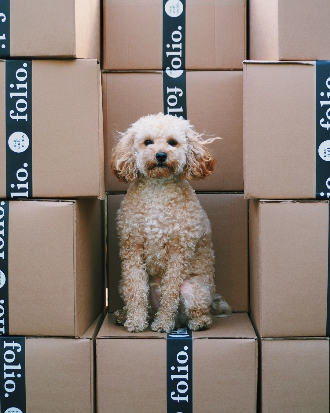 dog on top of shipping boxes